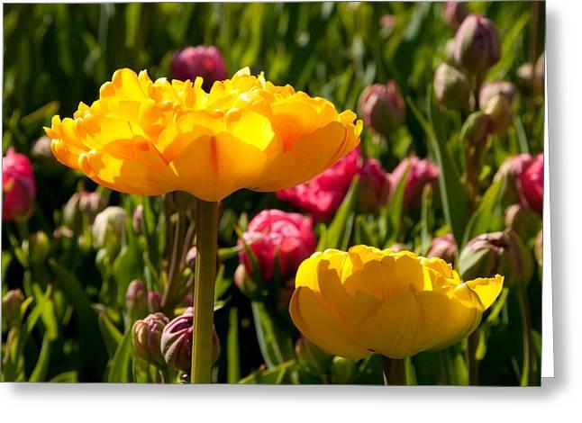 Garden Sunshine Greeting Card by Charlet Simmelink