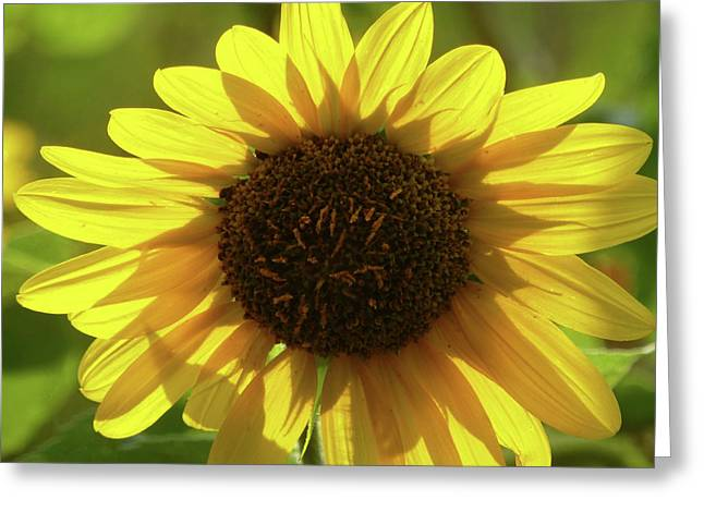 Garden Sunshine Greeting Card