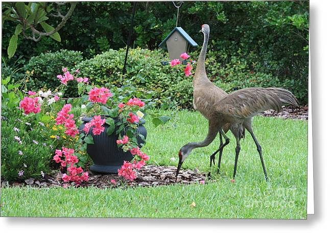 Bird-feeder Greeting Cards - Garden Visitors Greeting Card by Carol Groenen