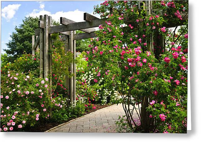 Lush Greeting Cards - Garden with roses Greeting Card by Elena Elisseeva