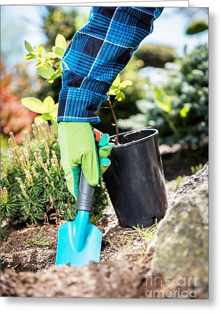 Gardener Digging With A Shovel. Greeting Card
