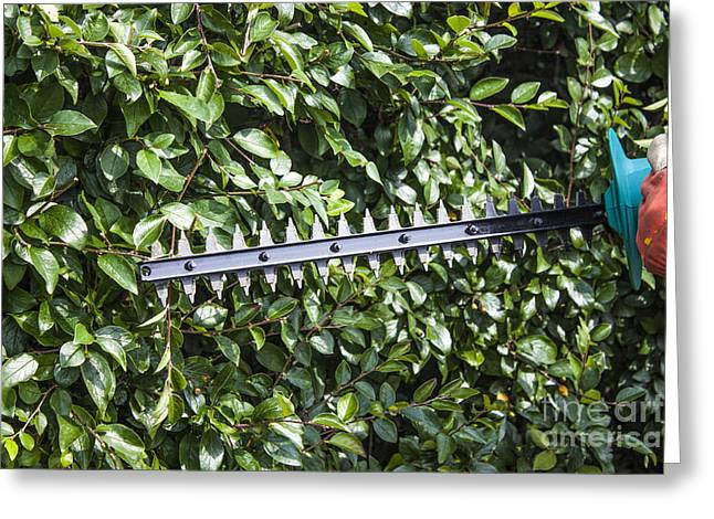 Gardener Trimming Bushes Greeting Card by D R