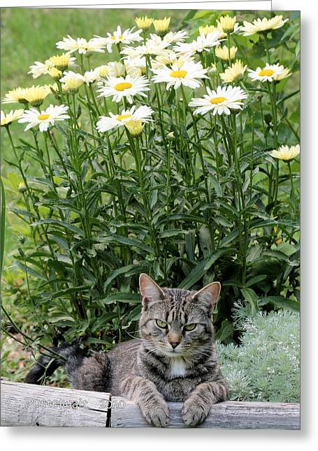 Garfield And Broadway Light Daisies Greeting Card