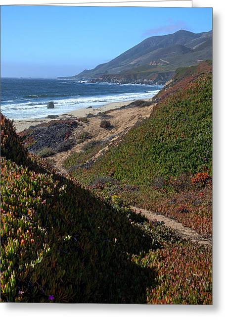 Garrapata State Park Greeting Card by Matt Hammerstein