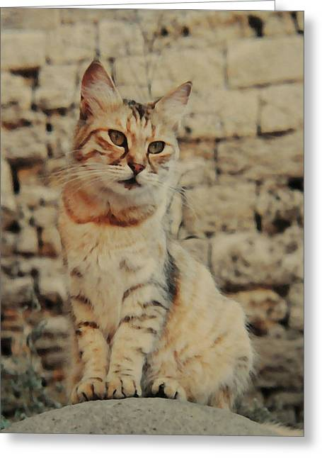 Gata Rhodes Greeting Card by Diana Angstadt