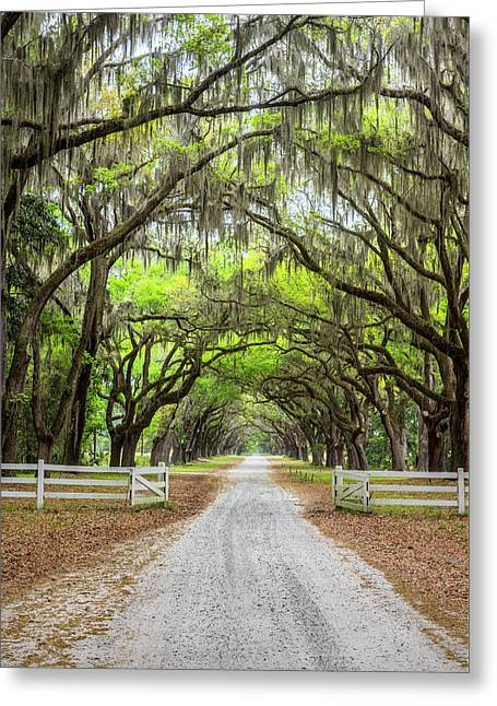 Gated Wormsloe Plantation Greeting Card