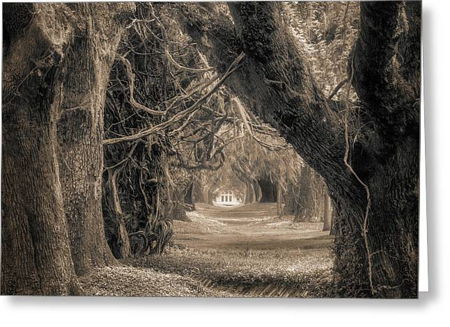Greeting Card featuring the photograph Gateway Through An Avenue Of Live Oaks by Chris Bordeleau