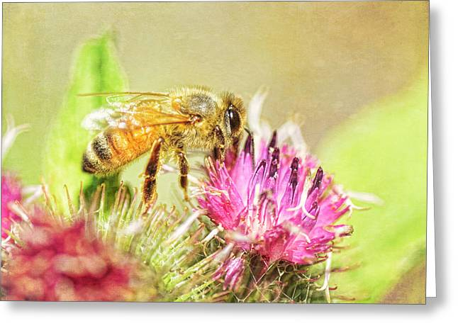 Gathering Pollen Greeting Card