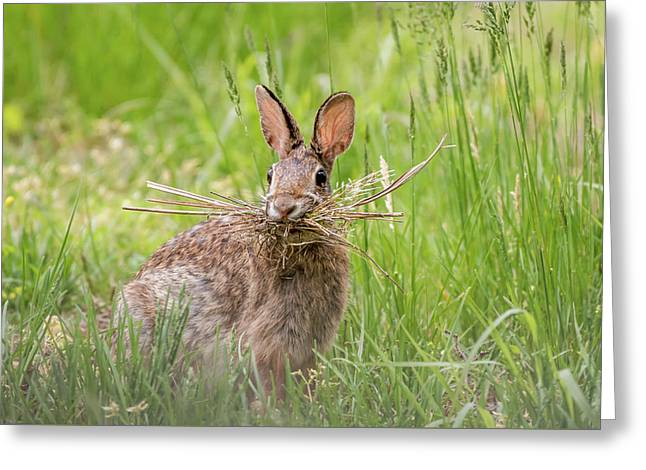 Gathering Rabbit Greeting Card by Terry DeLuco