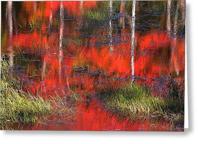 Gatineau Marsh Fall Colors Greeting Card