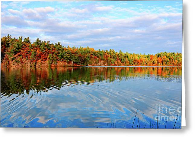 Gatineau Park Autumn Landscape Greeting Card by Charline Xia