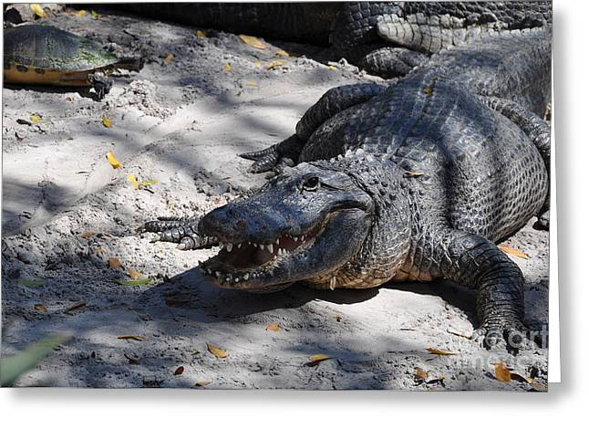 Greeting Card featuring the photograph Gator Bait by John Black