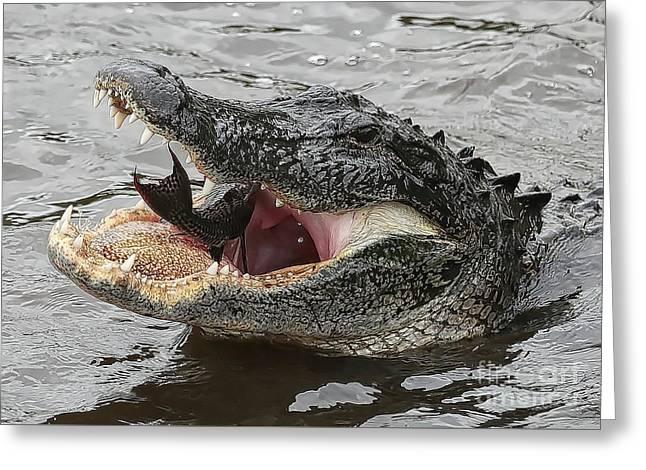 Gator Eating Fish Greeting Card by Carol Groenen