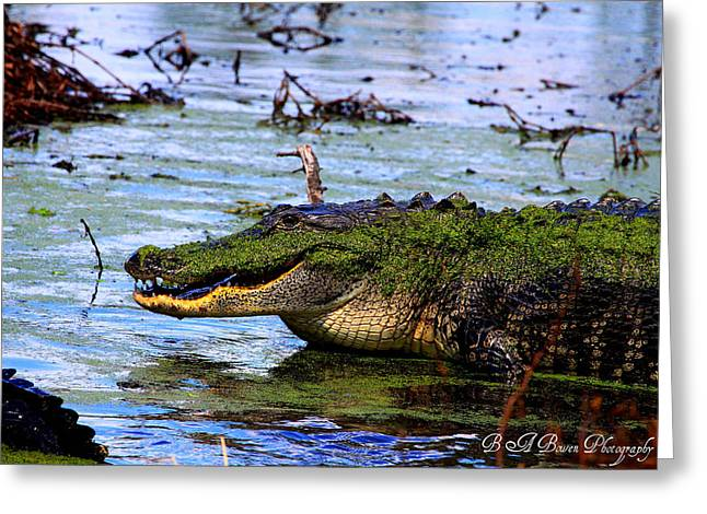 Greeting Card featuring the photograph Gator Growl by Barbara Bowen