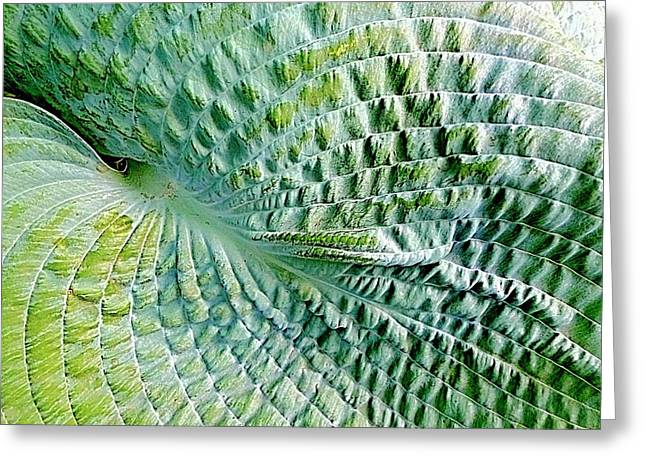 Gator Hosta Greeting Card