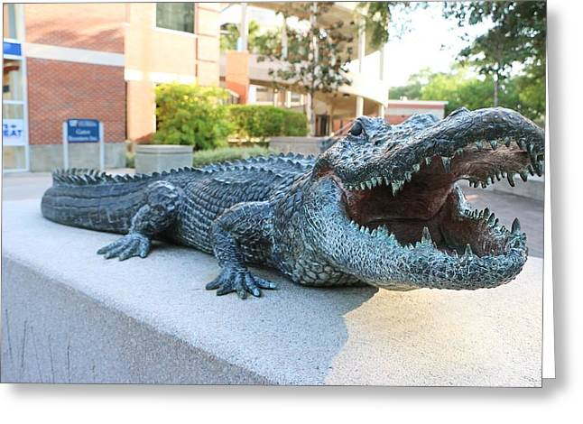 Sec Greeting Cards - Gator Greeting Card by Jackie Dorr