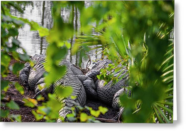 Gator Love Greeting Card