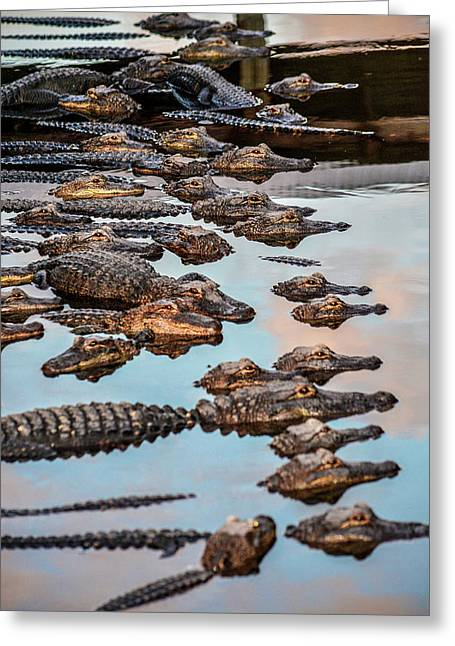 Gator Pack Greeting Card