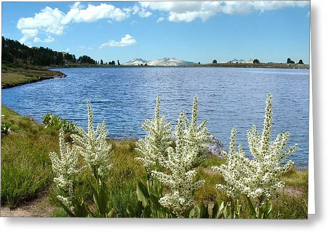 Gaylor Lakes And Queen Anns Lace Eastern Sierra Photo Greeting Card