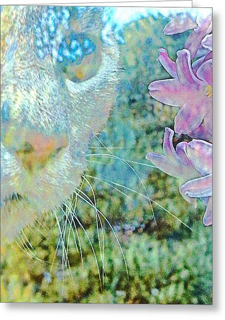 Gazing Out Greeting Card by Dorothy Berry-Lound
