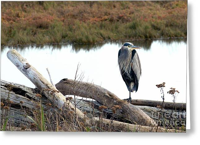 Gbh On Log Greeting Card by Sharon Talson