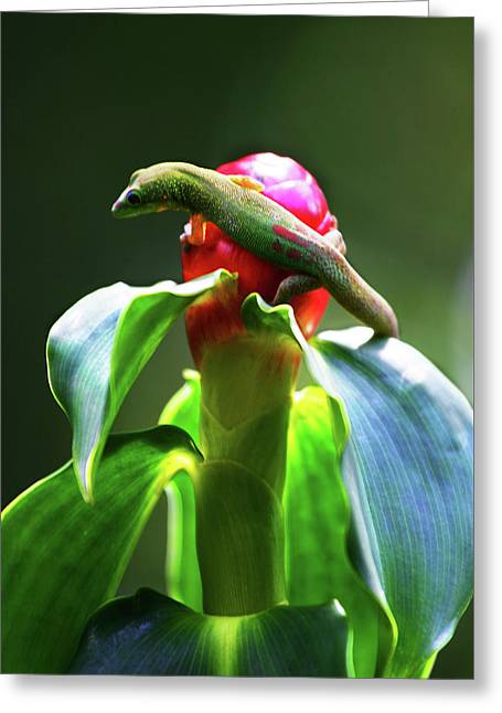 Greeting Card featuring the photograph Gecko #3 by Anthony Jones