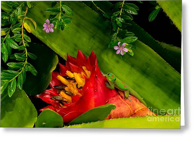 Gecko Aloha All Proceeds Go To Hospice Of The Calumet Area Greeting Card