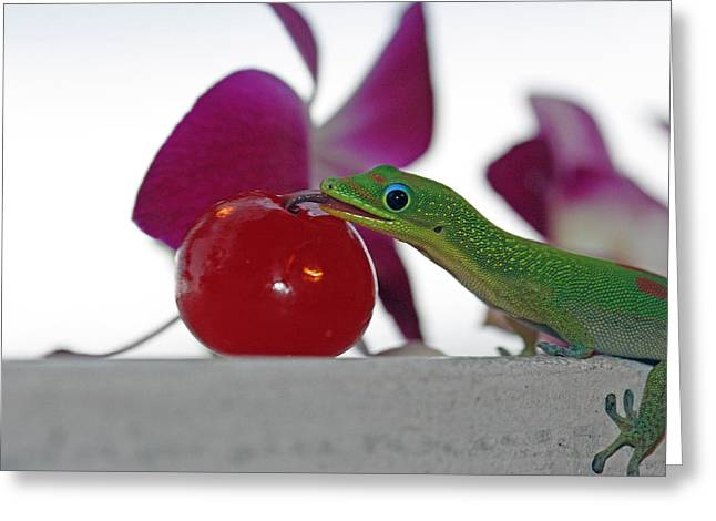 Gecko And Cherry Greeting Card by Sue Mayor
