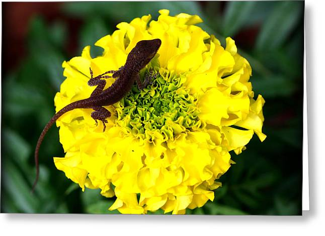 Geckos Greeting Cards - Gecko and Marigold Greeting Card by Susie Weaver