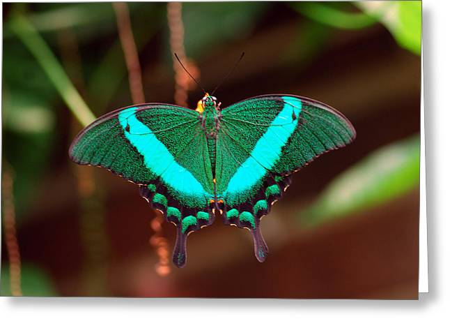 Geen Blue Butterfly Greeting Card