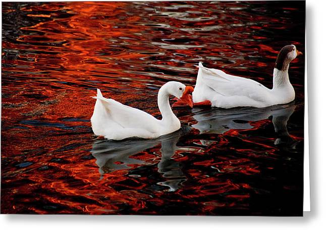 Geese At Lady Bird Lake Greeting Card by Mark Weaver