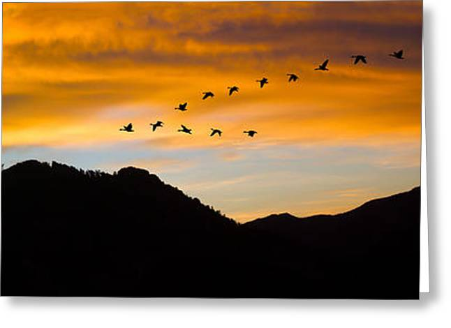 Greeting Card featuring the photograph Geese At Sunrise by Shane Bechler