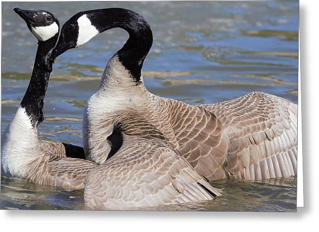 Greeting Card featuring the digital art Geese In Love by Margarethe Binkley