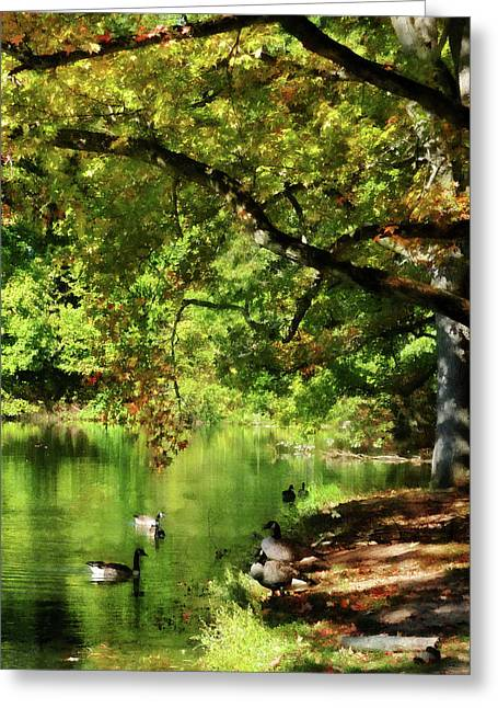 Geese By Pond In Autumn Greeting Card