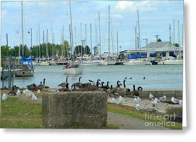 Geese By The Pier Greeting Card by Deborah Selib-Haig DMacq