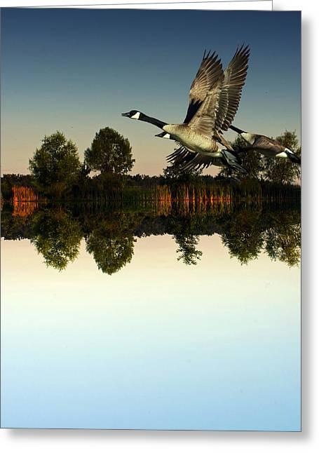 Geese Flynig Over Evening Pond Greeting Card by Ron Kruger