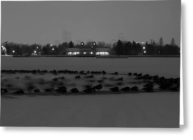 Geese In Frozen Lake Greeting Card