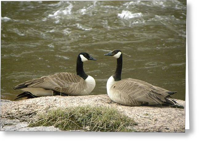 Greeting Card featuring the photograph Geese Platt River Deckers Co by Margarethe Binkley