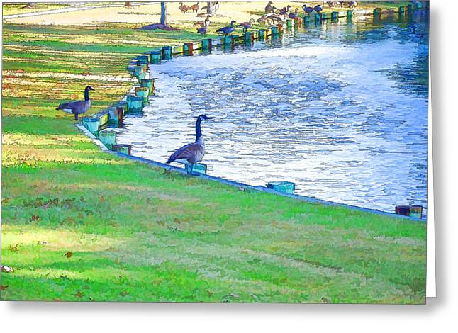 Geese In Pond Greeting Card by Lanjee Chee