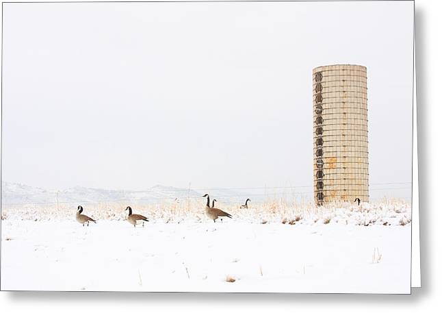 Geese In The Snow With Silo Greeting Card by James BO  Insogna
