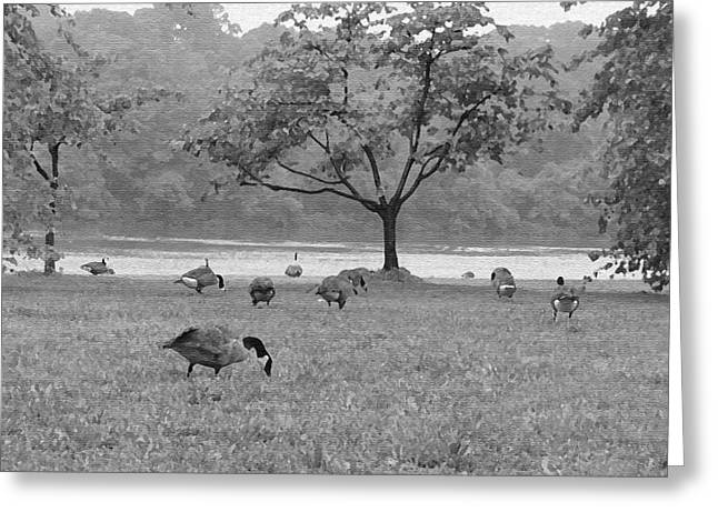 Geese On A Rainy Day Greeting Card by Bill Cannon