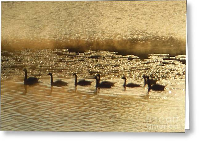 Geese On Golden Pond Greeting Card