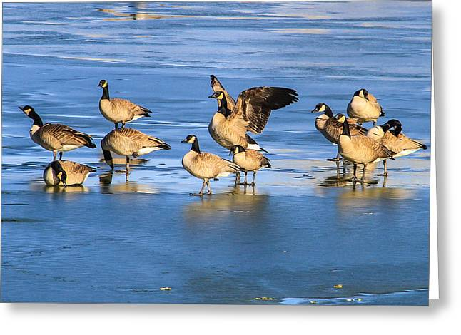 Geese On Ice Greeting Card by Juli Ellen