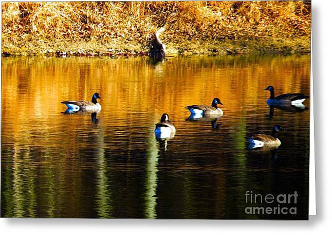Geese On Lake Greeting Card