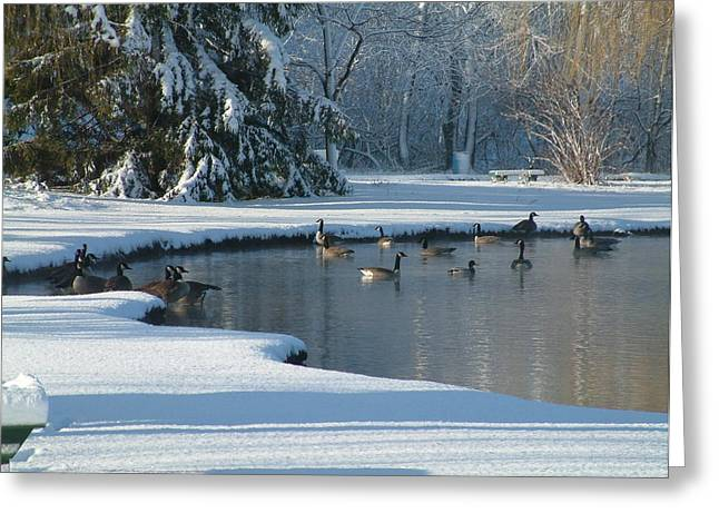 Geese On Pond Greeting Card by Gregory Jeffries