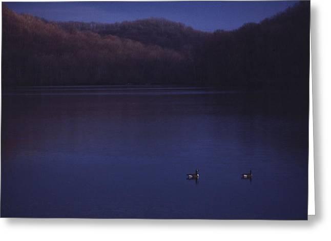 Geese On Radnor Lake Greeting Card by Randy Muir