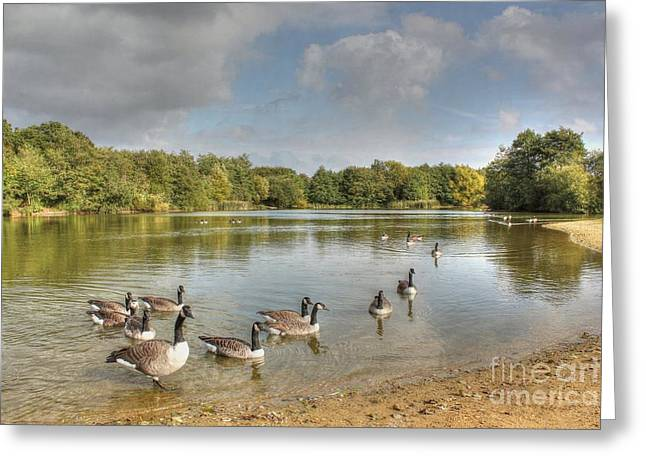 Geese On The Lake Hdr Greeting Card