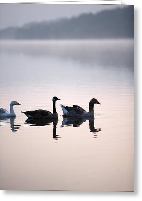 Geese On The Lake In The Mist Greeting Card by Gillham Studios