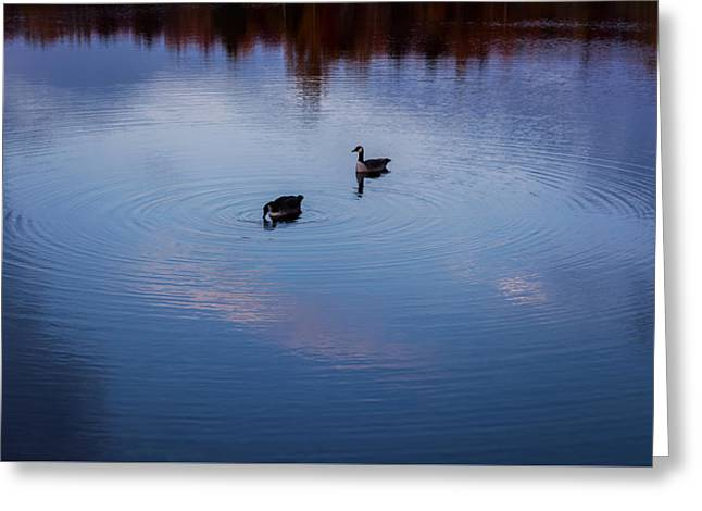Geese On The Lake Zen Greeting Card by Terry DeLuco