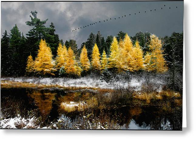 Geese Over Tamarack Greeting Card